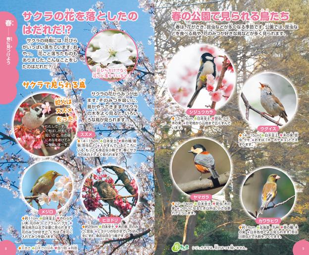 サクラの花にくる鳥と、春に見られる鳥たち。