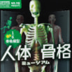 学研『科学と学習』の大人気ふろく「人体骨格模型」が、リニューアルで蘇る!!