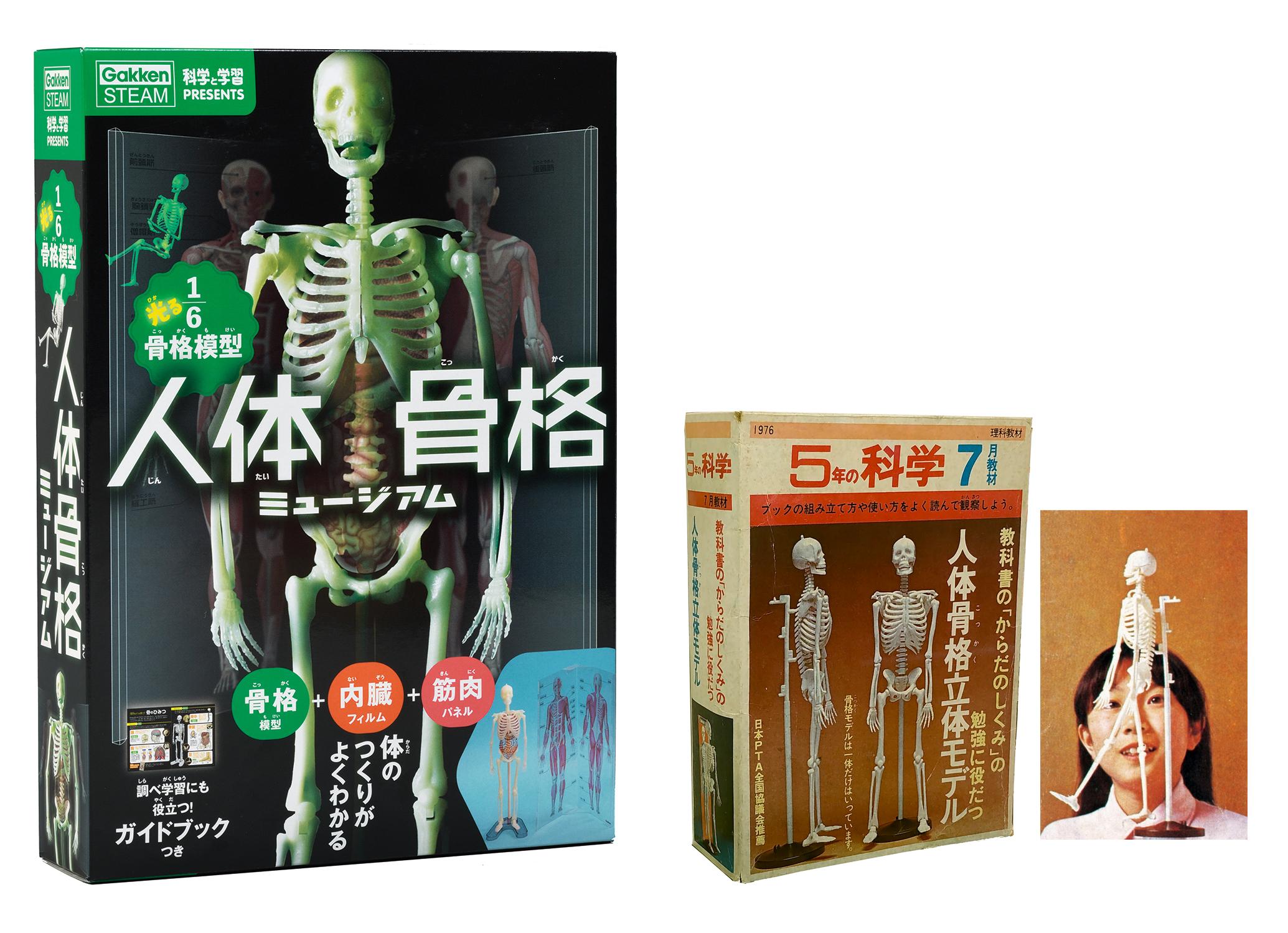「左:新発売の『人体骨格ミュージアム』、右:「科学」のふろくだった人体骨格模型」画像