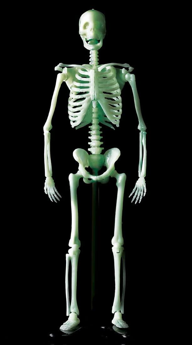 「骨格模型の完成像」画像