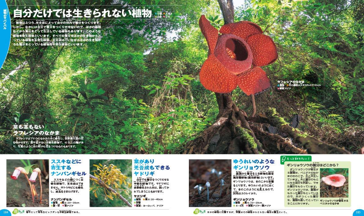 「自分だけでは生きられない 密林に咲く巨大ラフレシア」紙面