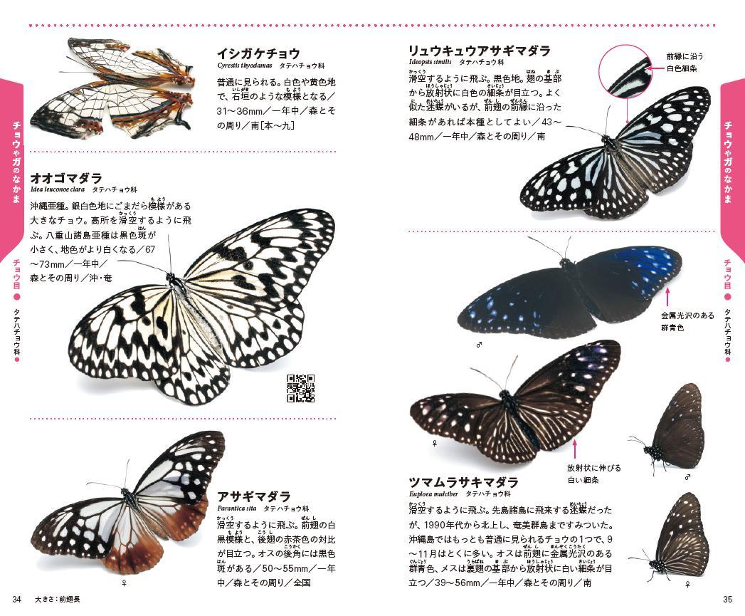 「沖縄県をふくむ南西諸島にくらすチョウが、生き生きとした姿で撮影されています」紙面