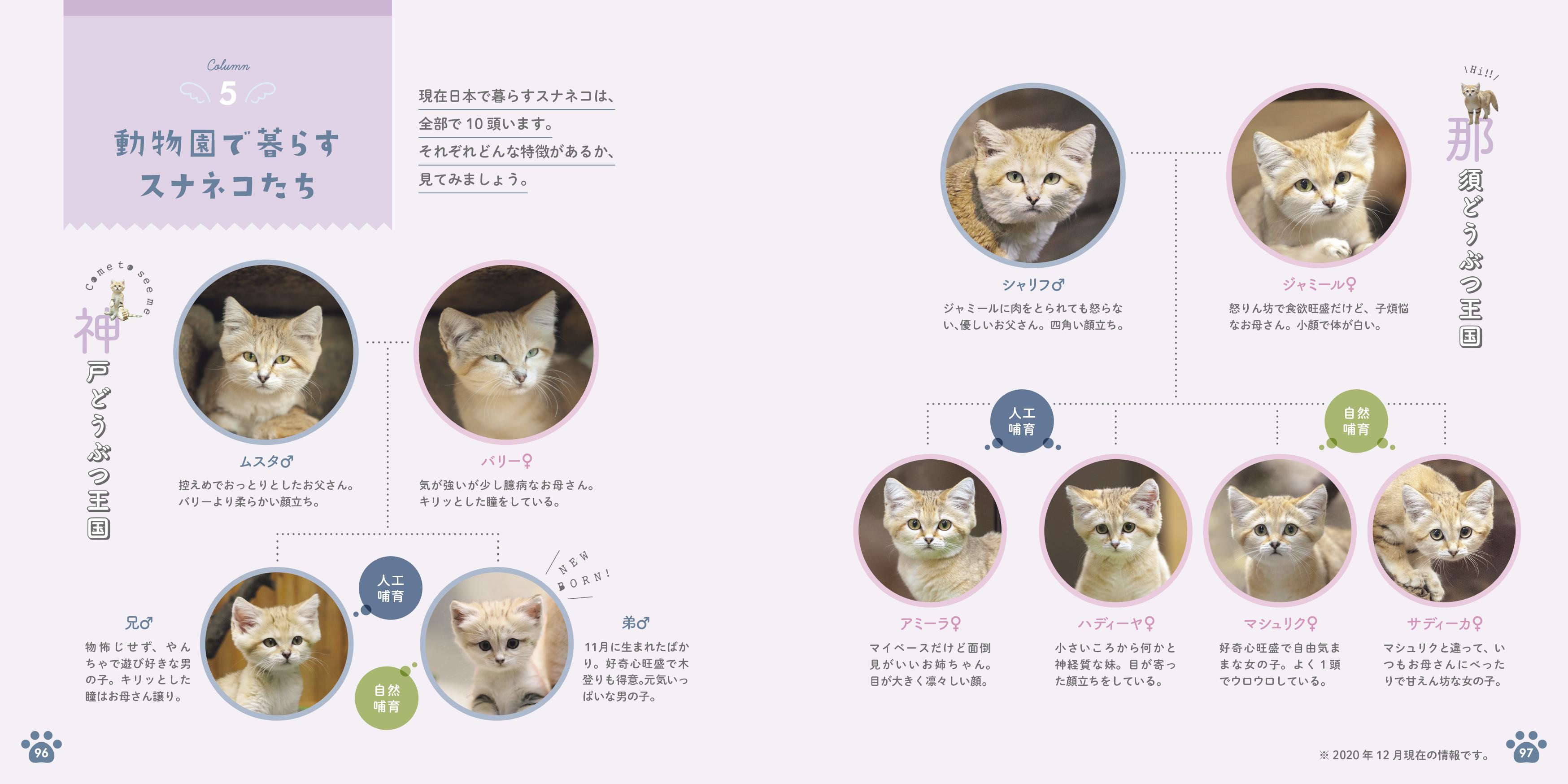 「那須どうぶつ王国、神戸どうぶつ王国で暮らすスナネコたちの家系図」紙面