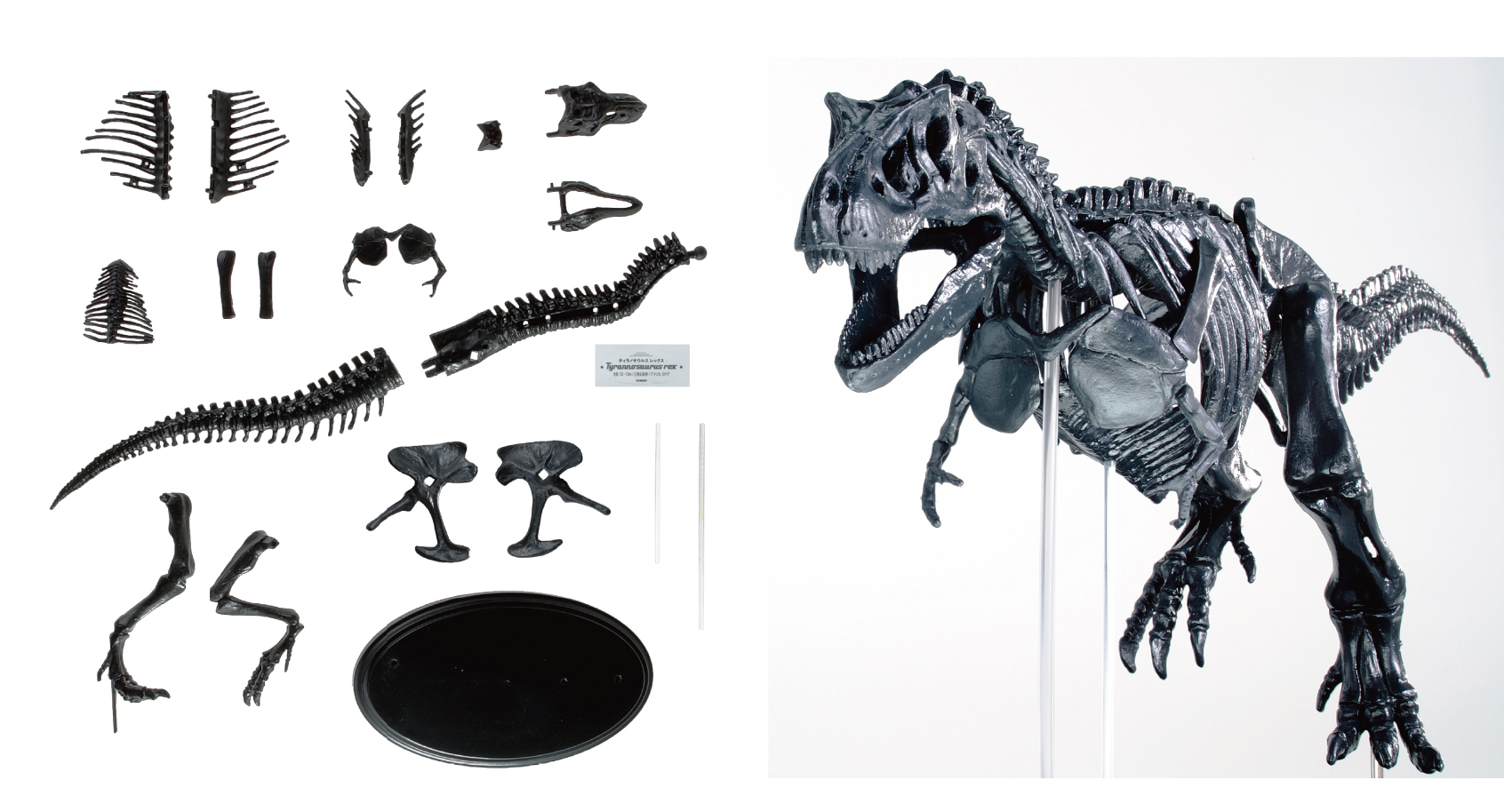 「17個の骨格パーツを組み合わせてティラノサウルスの骨格」画像