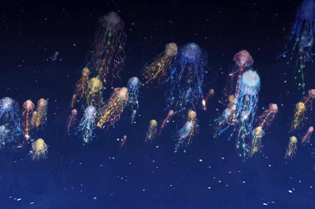 「海の旅を彩る美しいクラゲたち」画像