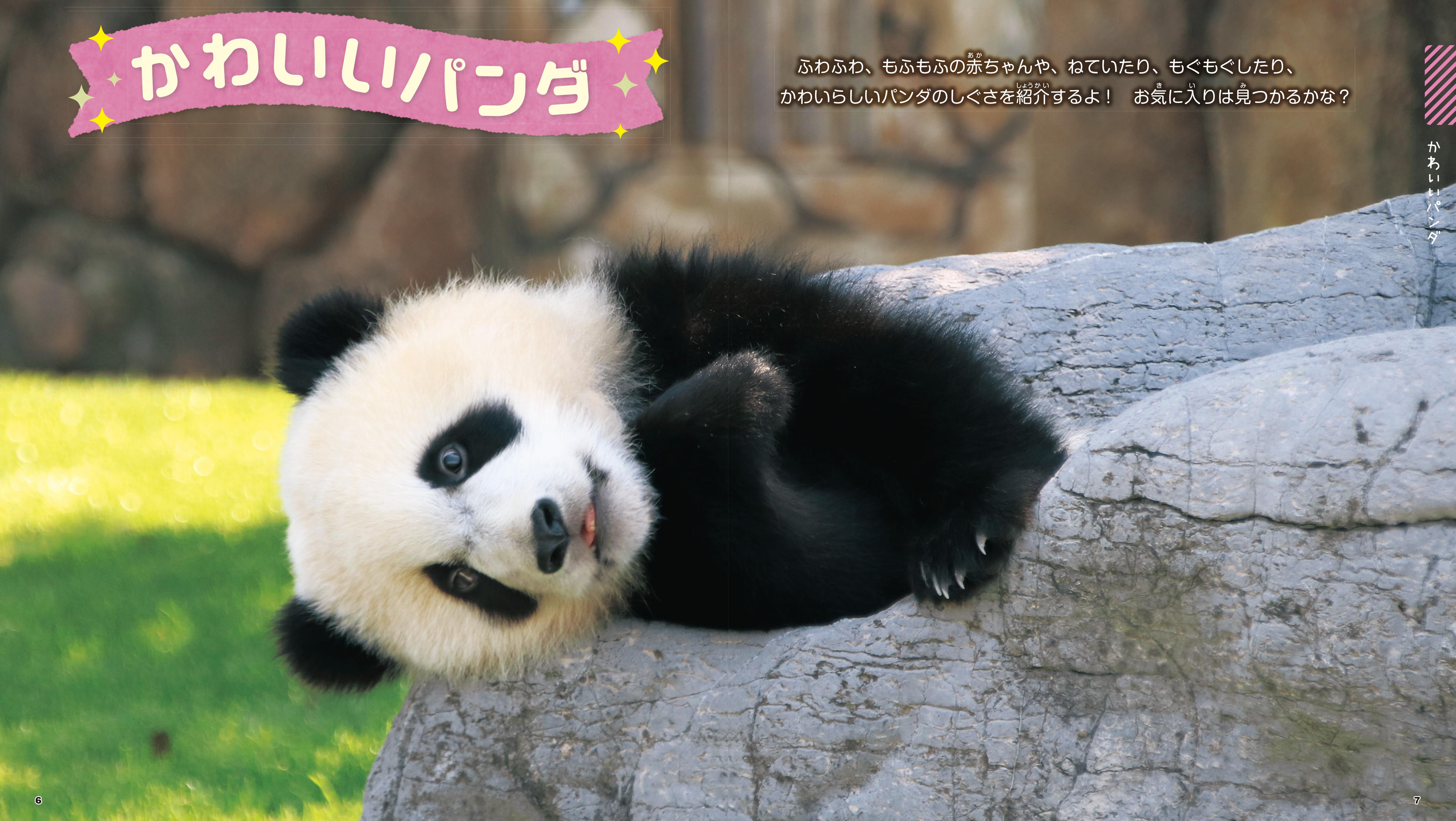 「かわいいパンダ」紙面